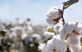Curso de formação de mão de obra para beneficiamento de algodão tem ciclo de palestras