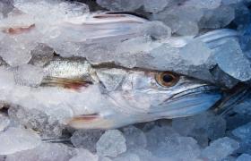 Vai comprar peixe nesta semana? Saiba como escolher produtos de qualidade